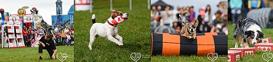 Dog Sport Events