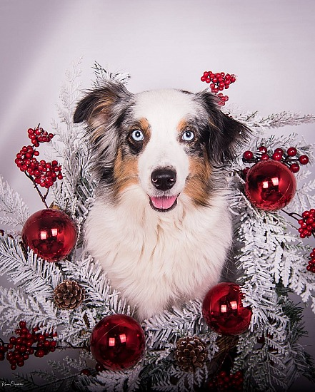 Bold Canine Christmas Photoshoot Day!